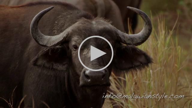 On Safari - Malawianstyle!