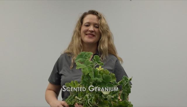 Flower 411: Scented Geranium