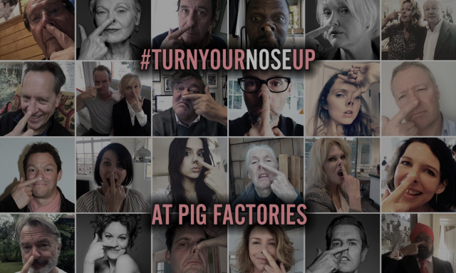 Celebrities turn their noses up at pig factories - #TurnYourNoseUp