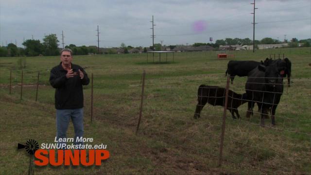 Cow-Calf Corner: Creep Feeders (4/30/16)