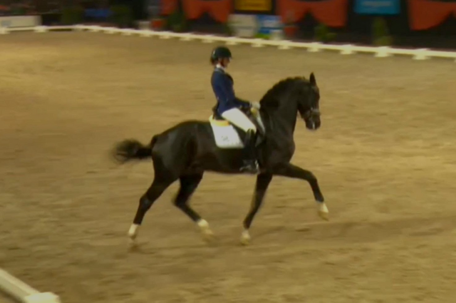 KWPN Stallion GLOCK's TOTO Jr.  (Totilas x Desperados)  won the Young Stallion Competition 92%