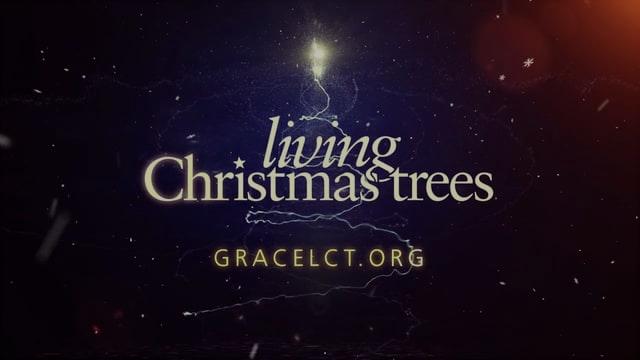 Living Christmas Trees Photo Montage