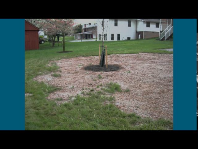 Lawn Repair Hagerstown MD Washington County MD