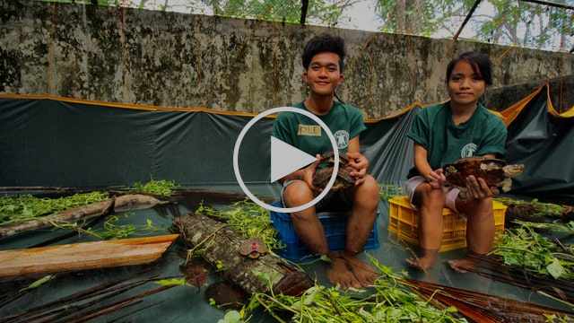 Palawan Forest Turtle Rescue Effort - Thank You