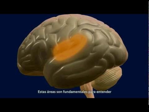 El cerebro feliz: proyecto divulgativo de la Universidad de Navarra.