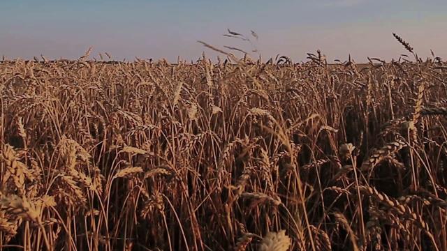 Climate Smart Farming Story: Oechsner Farm