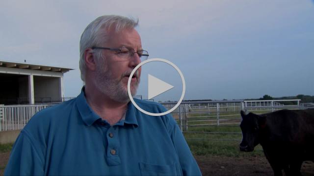 Livestock Markets (8/01/15)