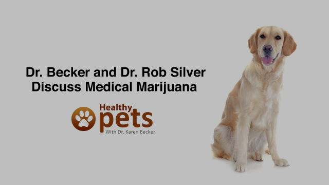 Dr. Becker Interviews Dr. Silver about Medical Marijuana