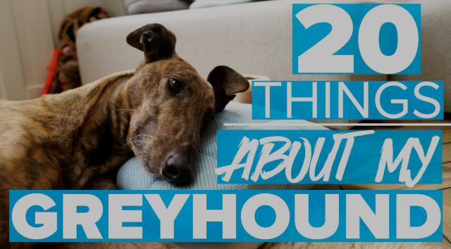 20 THINGS I LOVE ABOUT MY GREYHOUND | Estée Lalonde