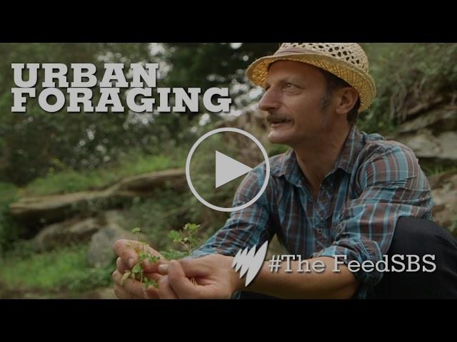 Urban Forager: Diego Bonetto I The Feed