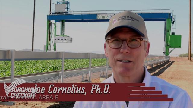 Sorghum: America's Next Biofuel Crop