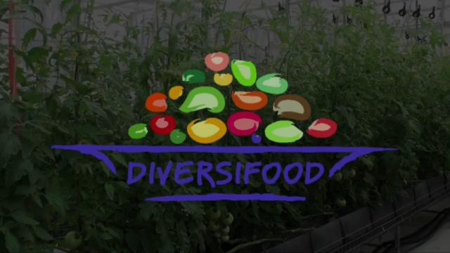 DIVERSIFOOD in PILLS | New food culture in Europe