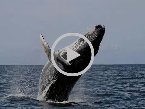 Whale watch    Maui 2017
