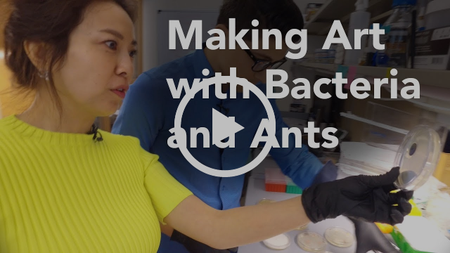 Making Art with Bacteria and Ants
