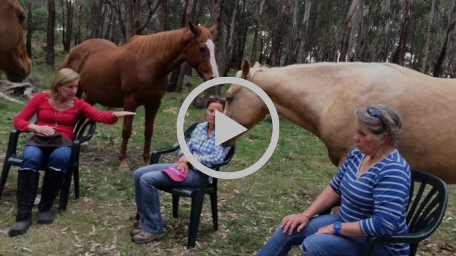 LANGUAGE OF HORSES
