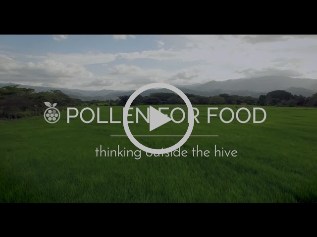 Pollen for Food – A Solitary Solution