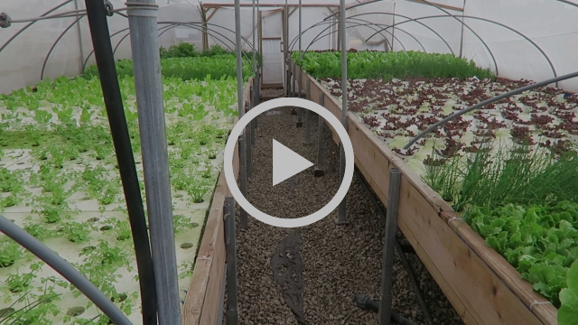 Incredible rooftop farm takes over Israel's oldest mall