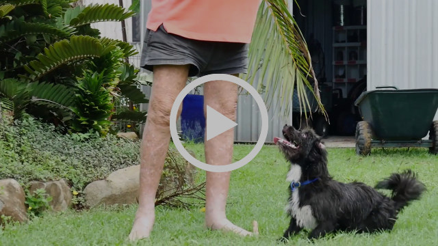 Senior Pets Inititative