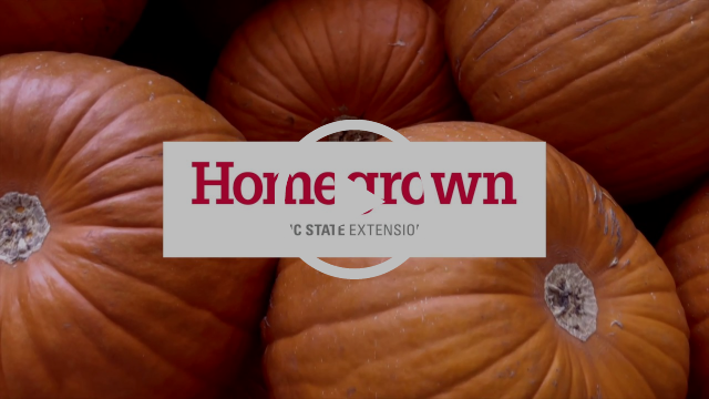 Big orange pumpkins stacked on one another with the Homegrown logo overlayed on the screen