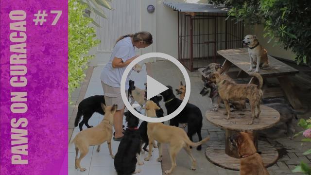 Dierenhulp op Curaçao #7 - Stichting DOG in Beeld
