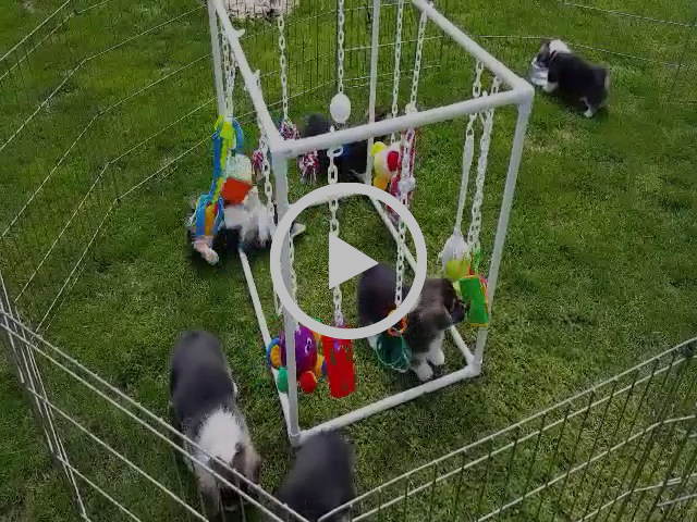 Puppy Play Centre