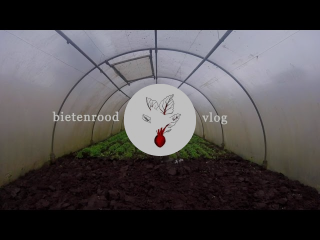 Bietenrood VLOG #8 - Babyplantjes, spitten en pureren.