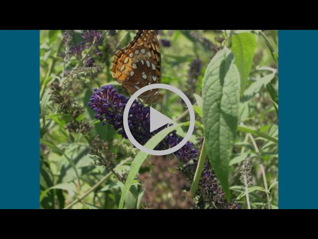 Butterfly Garden Williamsport MD Hagerstown MD