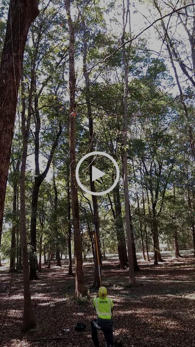 Big Shot throw line launcher; tree sling shot