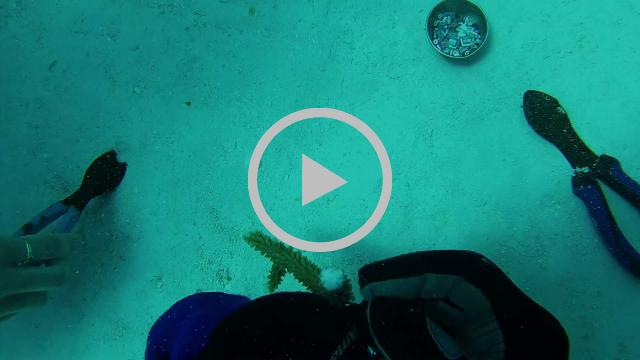 Active Divers Association Coral Reef Restoration
