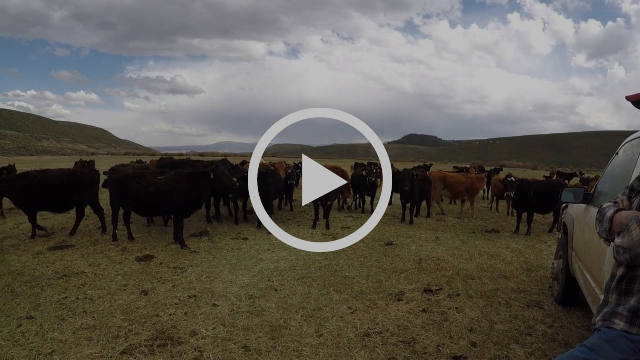 Rancher Greg Peterson Protects Sage Grouse in Gunnison, Colorado