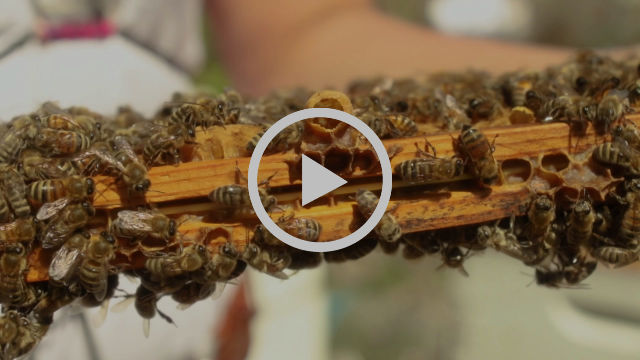 LearnAbout HoneyBees and Inspect a Colony with Project Apis m  Executive Director, Danielle Downey