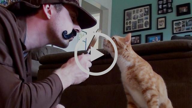 Cancer Clues in Cats #PetCancerAwarenessMonth