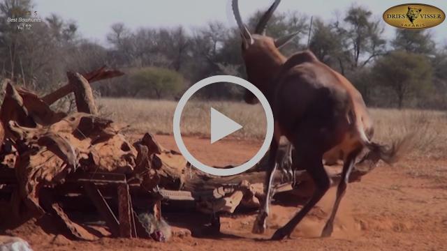 Dries Visser Safaris Presents Africa's Best Bowhunts Vol. 12