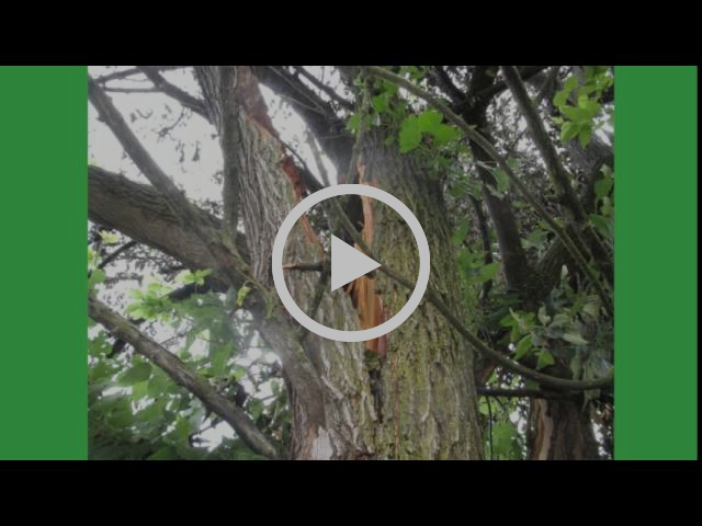 Tree Trimming Tree Removal Hagerstown MD Washington County M